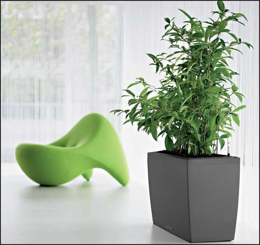 17 best ideas about indoor plants low light on pinterest house plants indoor house plants and - Plants for low light indoors ...