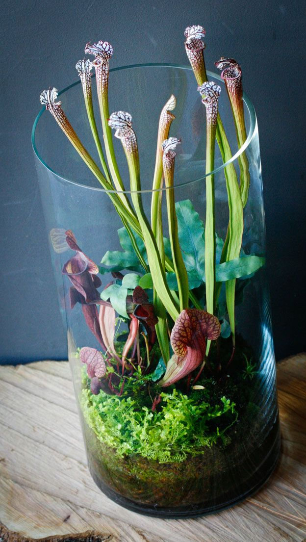 Homage to the Curious      Did you know that pitcher plants were so beautiful?    http://lilabdesign.com/portfolio/homage-to-the-curious#