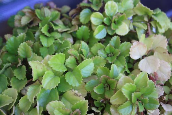 Cuáles son las mejores plantas para la buena suerte. ¿Quieres decorar tu hogar con plantas? Lo cierto es que son muchas las opciones por las que podrás decantarte, pero si a la vez puedes tratar de atraer los buenos augurios, tendrás mucho ganado. Y es ...