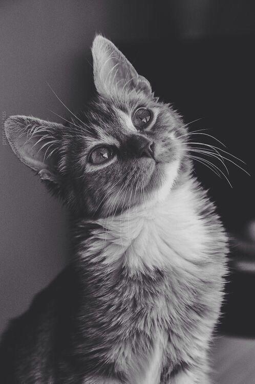 Treue bedeutet für Katzen nicht immer da zu sein, sondern immer wieder zu kommen <3