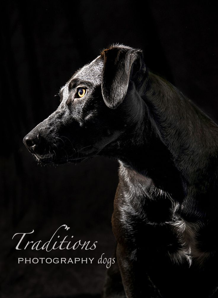 One of my favorite lighting techniques for black dogs.  This one is done with one studio light and a reflector. #lowkeyportraits