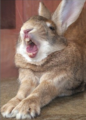Rabbit Stretching Stock Photos &amp- Rabbit Stretching Stock Images ...