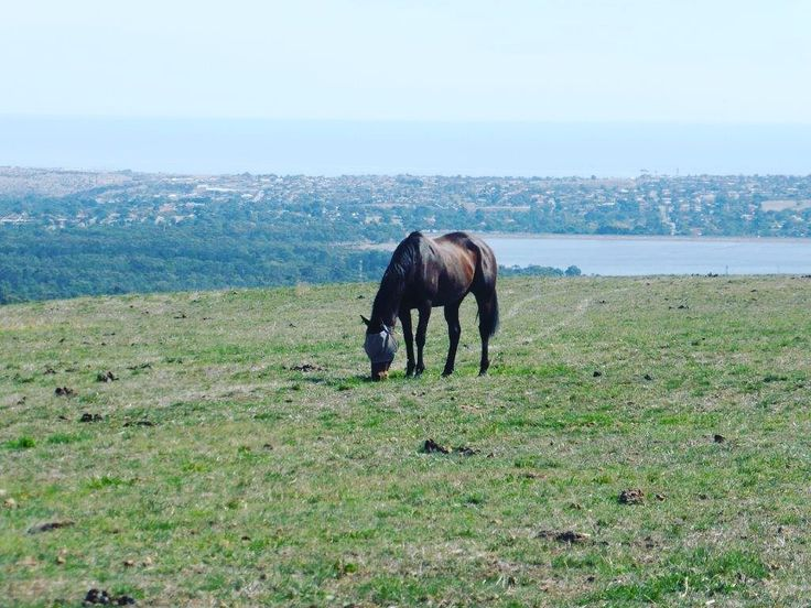 Top of the Morning from the top of Aberfoyle Park! House for sale  #sale #house #property #realestate #aberfoylepark #homedreams #onkaparinga #lake #horse #horses #blue #naomiwillrealestate