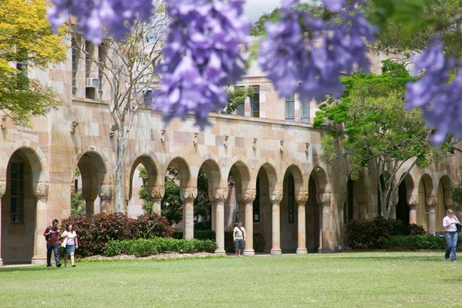 It is a dream of mine to study at UQ's St Lucia campus and read under the Jacarandas