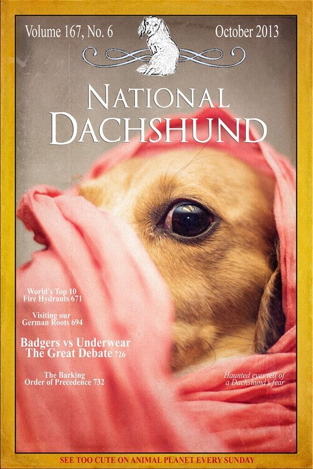 Dachshund Perfection I Wish This Could Be A Real Publicatio