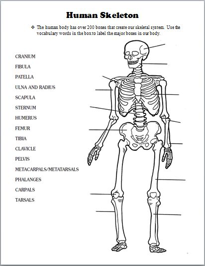 The 25+ best Skeletal system worksheet ideas on Pinterest