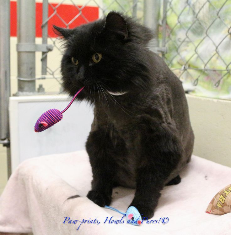 Cat Adoption Anchorage Ak