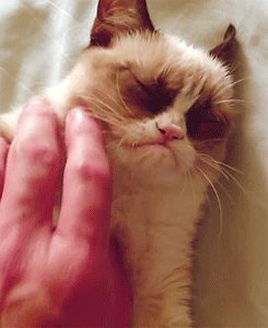 Grumpy Cat is not amused with your pathetic attempts to play (it's a gif!).