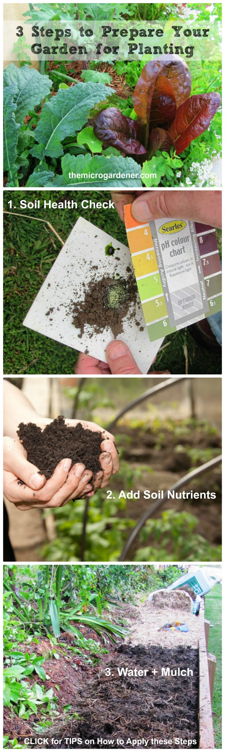 3 Steps To Prepare Your Garden For Planting Are Your Plants Thriving Or Just Surviving Are You