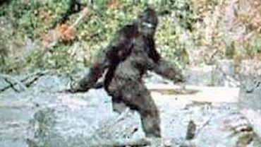 Bigfoot footage?