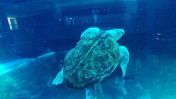 Diving – Two Oceans Aquarium Cape Town, South Africa