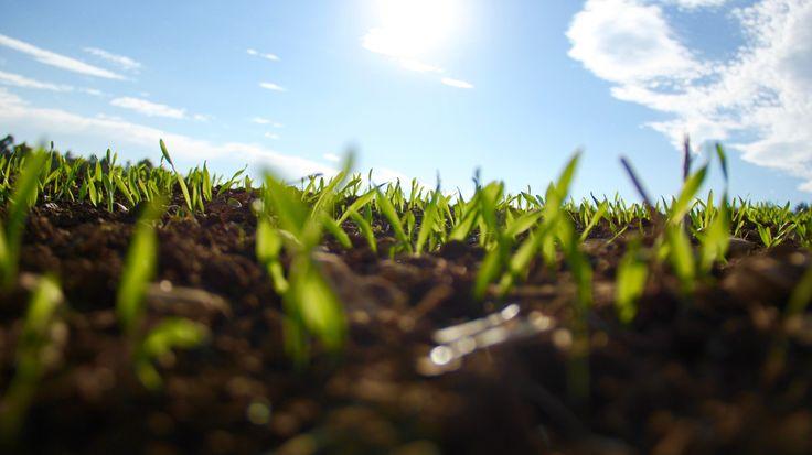 Yeşil iletişim bitkilerin dili