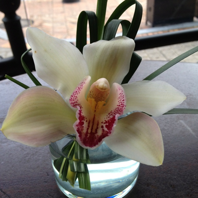 Colombian orchid right on my breakfast table