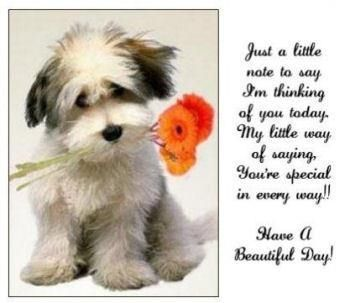 have a beautiful day quotes cute positive quotes quote morning