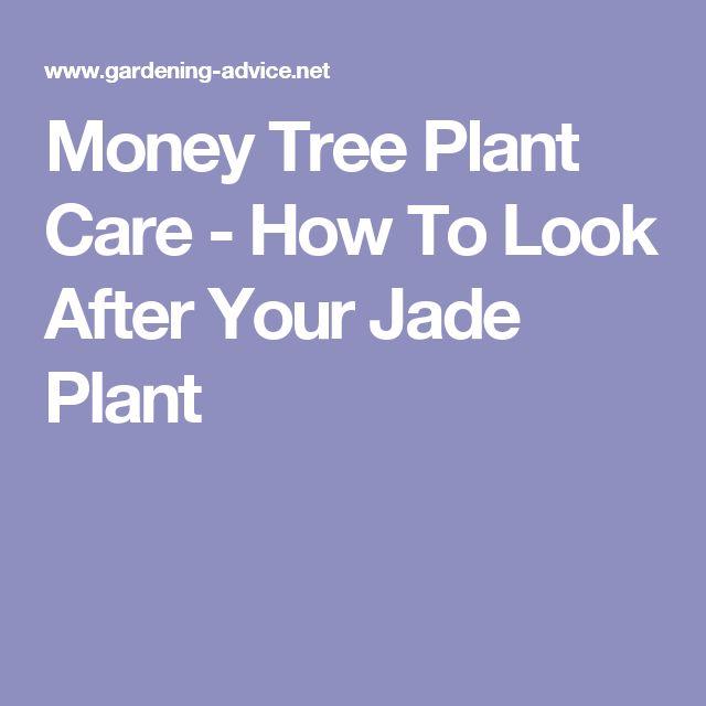 17 Best Ideas About Money Tree Plant Care On Pinterest