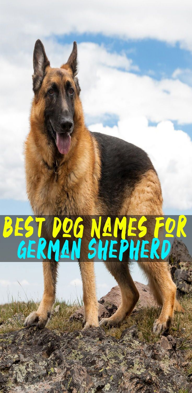 Best Dog Names for German Shepherd | dog names | Best dog