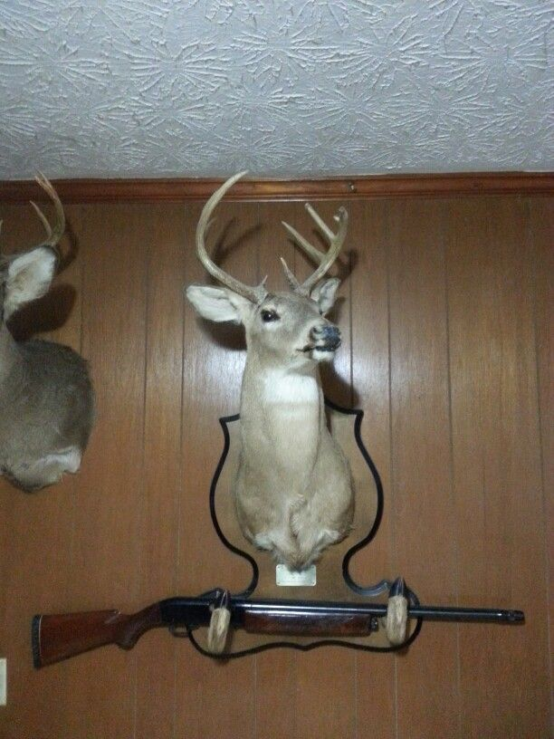 1192 Best Images About Mounted On Pinterest Deer Hunting