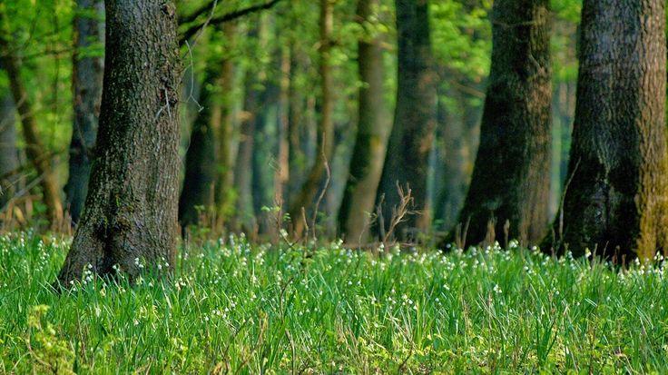 Fák,erdők,parkok.Elbi blogja: A Borrév-tónál