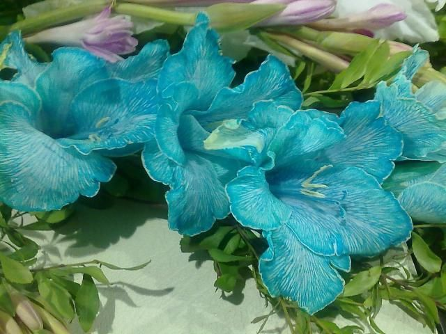 Blue Gladiolus- in season in july. These are sooo beautiful, gladioli are my very favorite