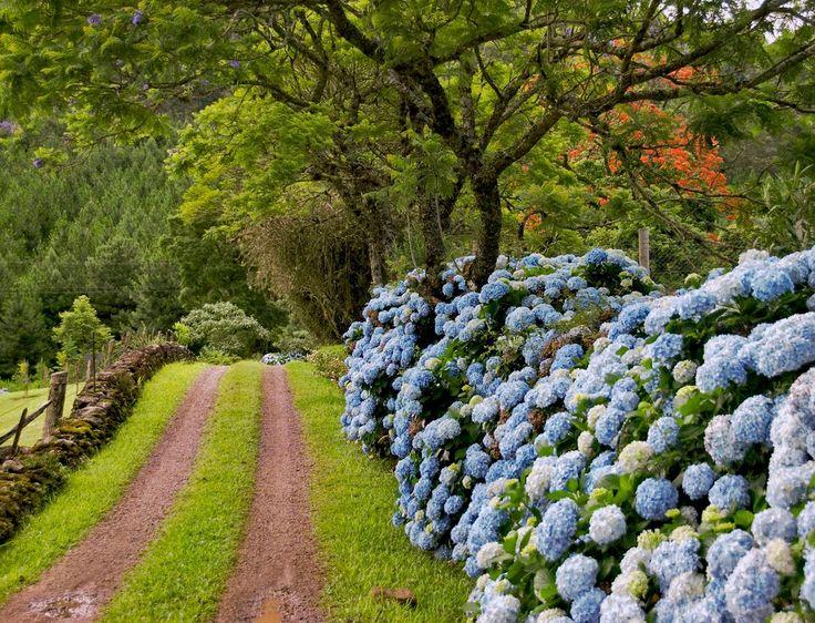 blogAuriMartini: Imagens da Belissima serra gaucha