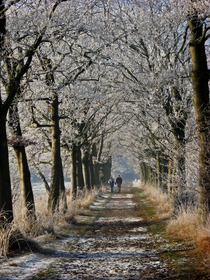 Winter Walk- Baarn, Netherlands (by Vineyards): Netherlands Bi, Country Roads, Baarn, Paths, Winter Wonder, Bi Vineyard, Winter Walks, The Netherlands, Photo