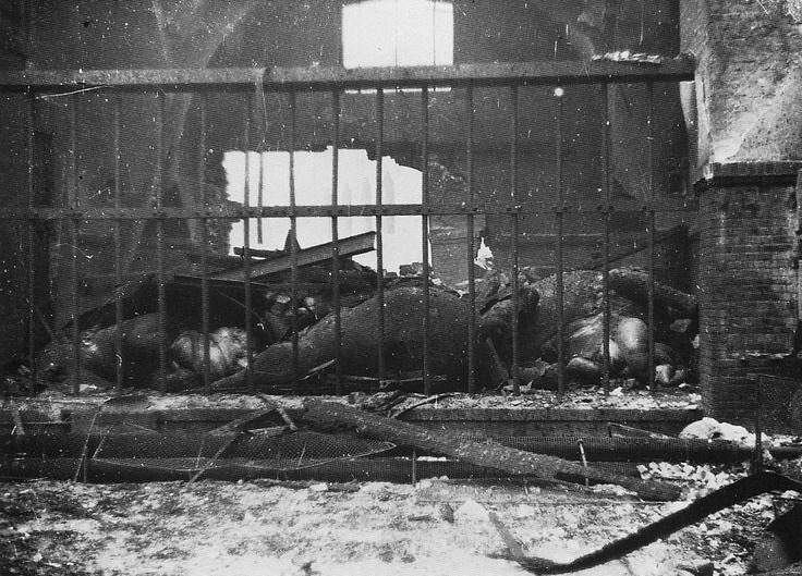 Popular a dead elephant in the bombed elephant house berlin zoo WWII Berlin Pinterest Zoos