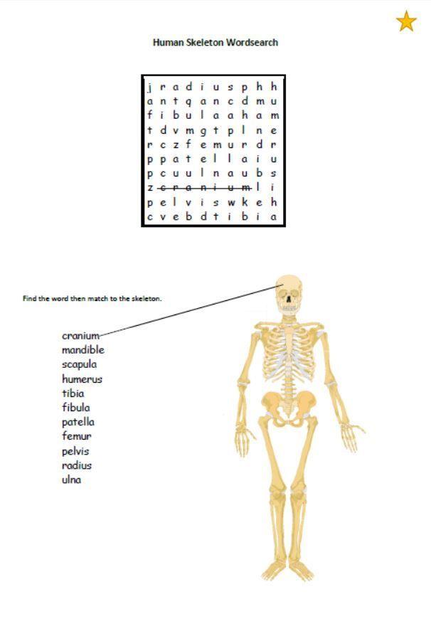 Human Skeleton Wordsearch Human Body Unit Pinterest Activities