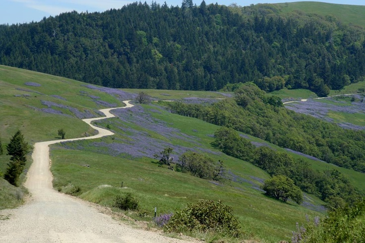 Bald Hills, part of Redwood National Park during a spectacular lupine bloom