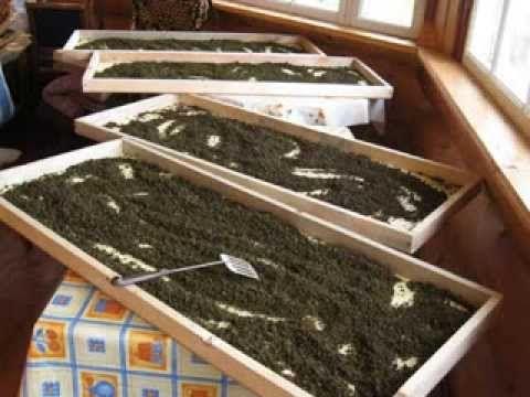 Как делать гранулированный иван-чай, видео от Георгия Колганова - YouTube