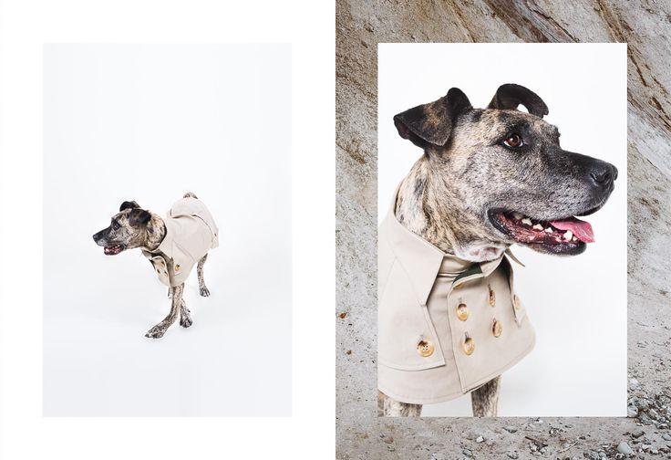 Fashionable Dog Poster Art by Paul Aidan Perry // via disruptivedog.com