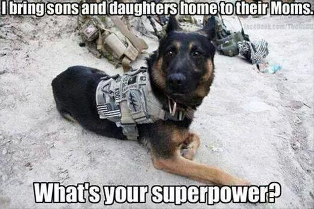 MWD...No expense should be spared for these Military Working Dog heroes. So many have saved literally hundreds of lives by finding IEDs and weapons caches in Iraq and Afghanistan...worthy of the Medal of Honor. Thousands of mothers and fathers owe the lives of their sons and daughters to these guys. I'd give them the shirt off my back.