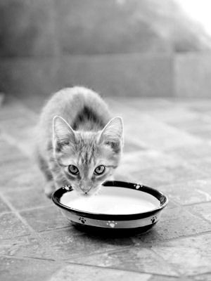 Q: My daughter likes to sneak our kitten a saucer of milk. He laps it up,  but I've heard milk isn't good for cats.