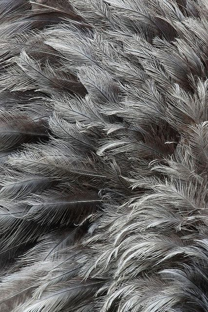 grey feathers - natural colours & light wispy textures for organic, bird inspired design.