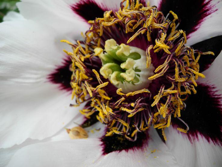 #love #flower #detail