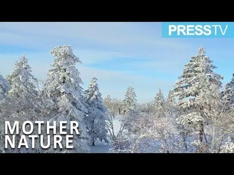 Press TV News: Mother Nature tours gain popularity among new year holidaymakers in China #latestnews #worldnews #news #currentnews #breakingnews