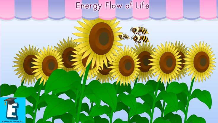 Energy flow of life by Educational Program For Kids