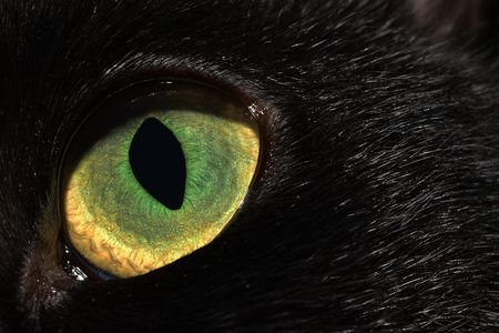 Cat's eye Photo by Gabriel Burns -- National Geographic Your Shot