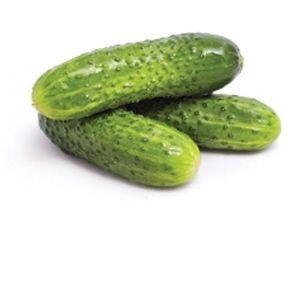 Cucumber Desi (देसी खीरा)