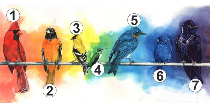 Válassz egy madarat! Megmutatja mire van most a legnagyobb szükséged! - Zöld Újság