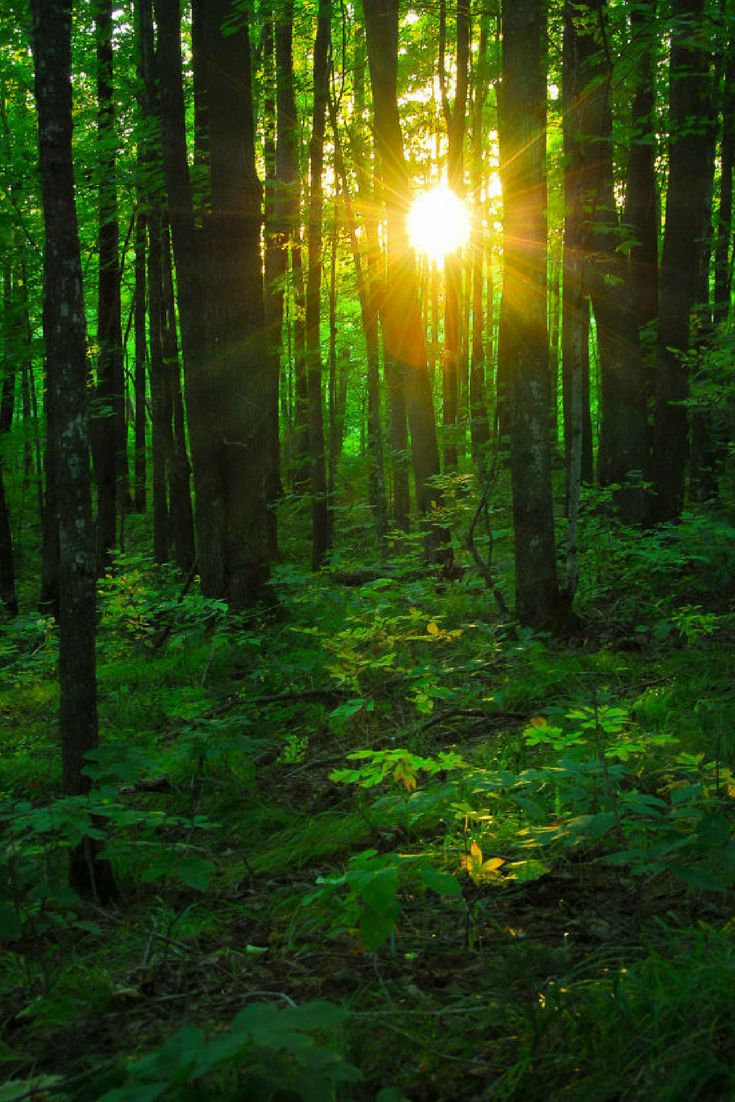 Nature Photography, Sun Light In Forest, Fine Art Print