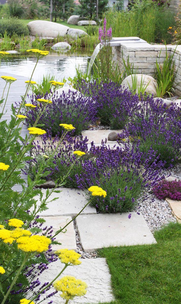 řebříček a levandule / yarrow and lavender