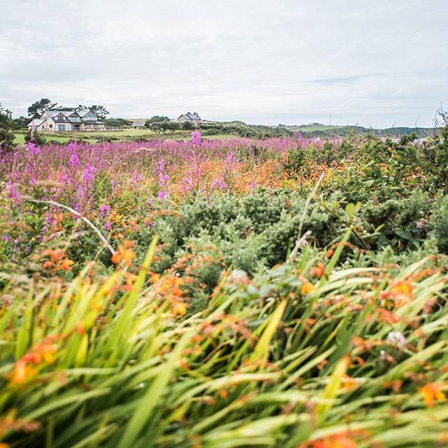 When its grey and rainy weather like it is today, this colourful photo (made in Wales) always cheers me up! #lovelywales #hikingcoastpath #outdooradventure #colourfulflowers #naturelovers #gooutside #exploremore #outdoorphotographer #by_manja #outdoor #beautifulplaces