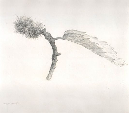 image of still-life goldpoint and silverpoint drawing Autumn Study #2 by David Ladmore