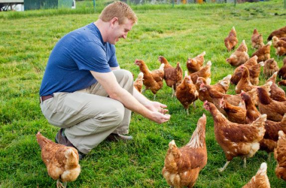 Happy Chickens Lay Better Eggs & You Can Get 100% FREE Range Eggs at BJ's - http://www.mybjswholesale.com/2016/07/happy-chickens-lay-better-eggs-can-get-bjs-club.html/
