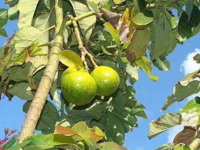 415 mejores im genes sobre plantas en pinterest - Como se podan los arboles frutales ...