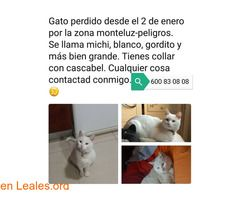 Gato perdido en Granada  #Perdido #Encontrado #sebusca #extraviado #LealesOrg  Contacto y info: Pulsar la foto o: https://leales.org/perdidos-o-encontrados/gatos-perdidos/gato-perdido-en-granada_i2698 ℹ  Necesitamos encontrar se llama Michi tiene 10 años es blanco entero y tiene un collar con cascabel.  Es muy bueno y cariñoso es muy raro que se haya escapado y no vuelto se ha tenido que meter en algún coche y quedarse atrapado seguramente esté en otro pueblo del que se le vio por última vez…