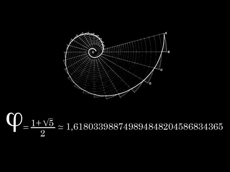 1 to 1.618 over and over and over again.The Fibonacci sequence. A mathematical sequence discovered in the 12th century. A pattern appears in nature over and over again… The curve of a wave, spiral of sea shell, segments of a pineapple. The universe is made of precise patterns and proportions. Everything is connected. Only some of us can see how the pieces fit together.