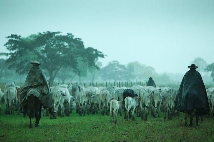 Takezawa viajou para África, Caribe, América Central, Oriente Médio, América do Norte e do Sul. No Pantanal brasileiro, ele encontrou estes peões conduzindo gado em uma planície