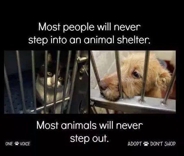 If you're going to adopt a pet PLEASE ADOPT SHELTER ANIMALS! There are amazing animals that at no fault of their own have landed in the shelter. PLS HELP SAVE THEM.