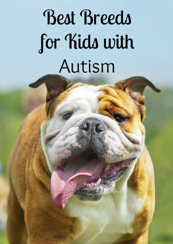 Thinking about getting a dog for a special needs child? See our picks for the best dogs for kids with autism! A special buddy can make a big difference! For related pins and resources follow https://www.pinterest.com/angelajuvic/autism-special-needs/